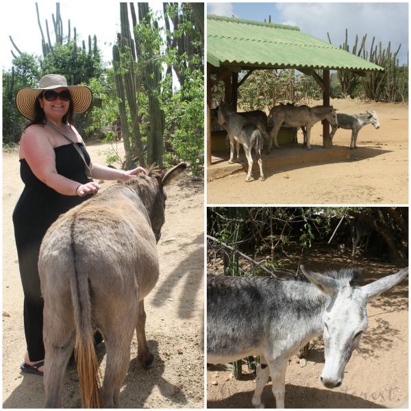 The donkey sanctuary Aruba