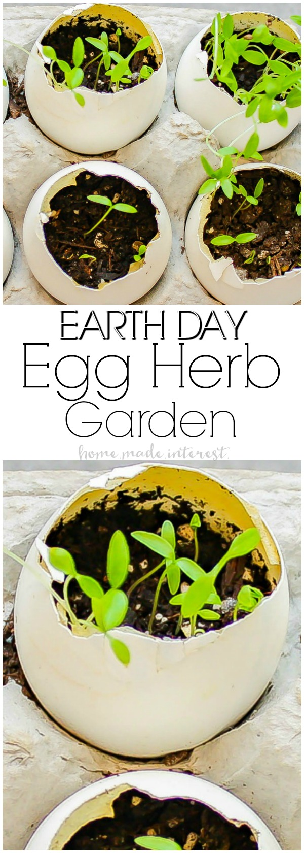 Eggshell Herb Garden | This simple Eggshell Herb Garden is a fun Earth Day Project to do with the kids! Teach your kids about sustainability and recycling using eggshells to make planters for herbs. Completely biodegradable and earth-friendly. A great kid activity for Earth Day!