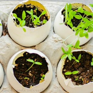 Egg Herb Garden | This simple Egg Herb Garden is a fun Earth Day Project to do with the kids! Teach your kids about sustainability and recycling using egg shells to make planters for herbs. Completely biodegradable and earth-friendly. A great kid activity for Earth Day!