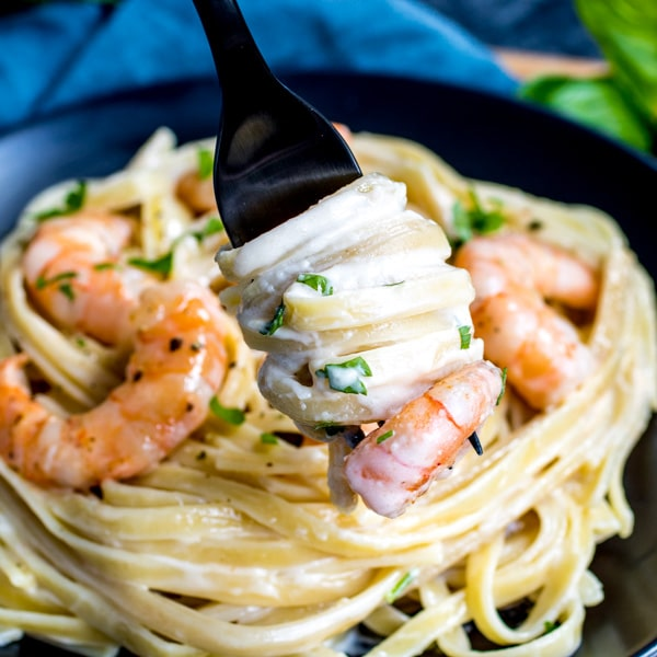 creamy Shrimp Alfredo on a fork