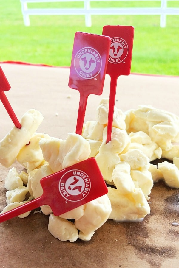 cheese curds at dairy food tour